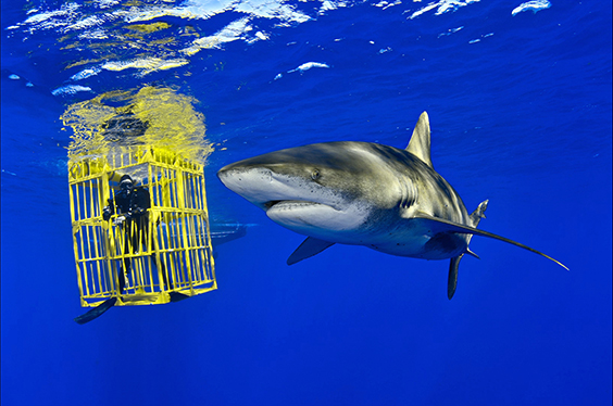 Photo by Brian Skerry for The Power of Photography exhibit