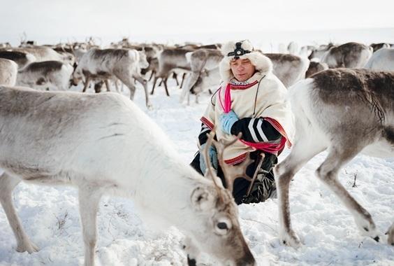 Erika Larsen: The Sami Reindeer Herders