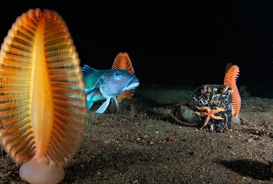 Brian Skerry: Ocean Soul