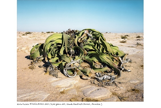Rachel Sussman: The Oldest Living Things in the World photo