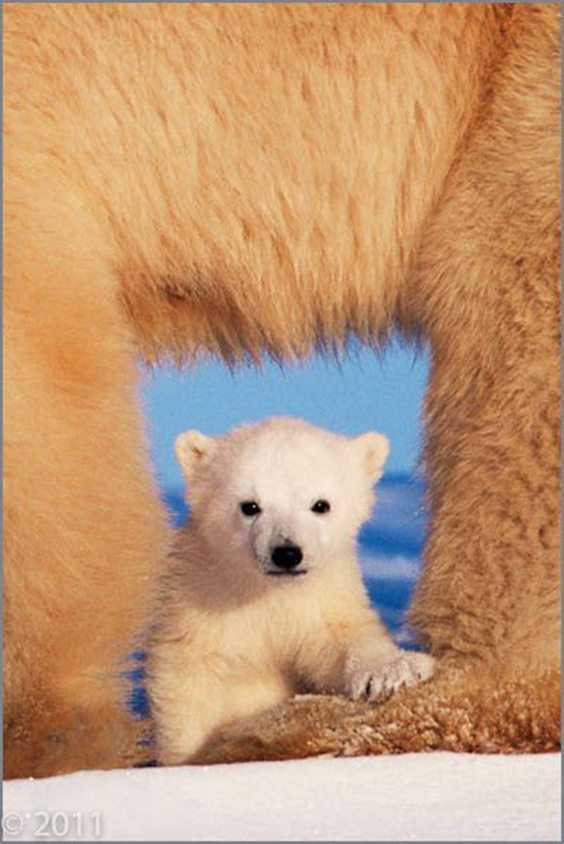 Photo by Art Wolfe for Extreme Exposure exhibit
