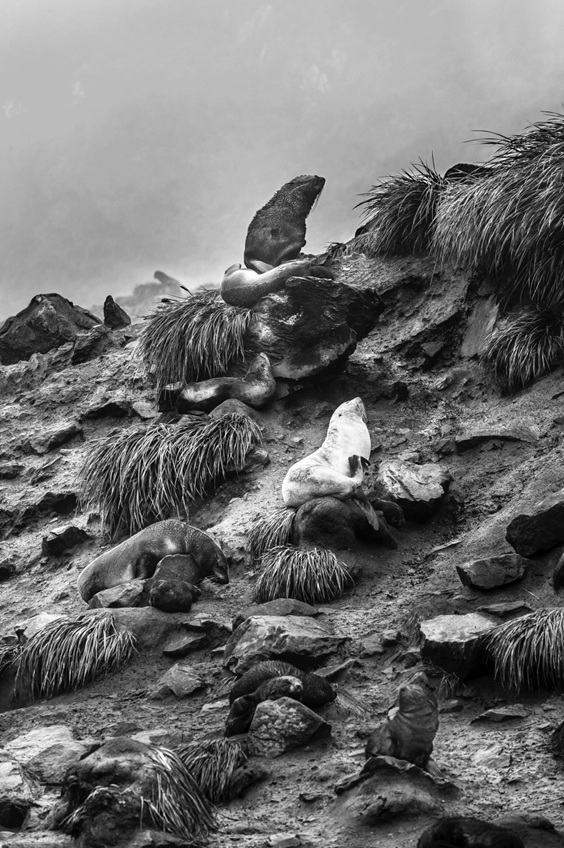 Photo by John Rowe for The Power of Photography exhibit