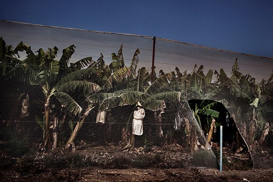 Israel, 2009  Mesh-covered banana plantations like this one abound along both sides of the Jordan River. The tropical crop is lucrative, but it requires eight times as much water as tomatoes, which are also locally grown.