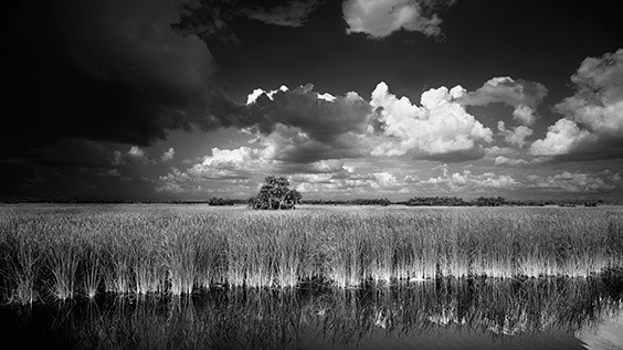 """We were out hiking in the grassy plains on a summer day, and the beauty of the water, grass and cypress trees seemed to express the entire eco‐system of South Florida. I couldn't resist taking a photograph."" ‐ Clyde Butcher"