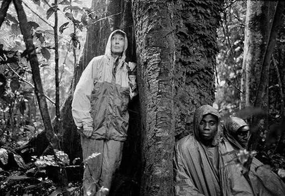 In 2002, Jane Goodall, then 68, hiked through three swamps to lend her celebrity to the effort to expand a national park that would protect the vulnerable naïve chimps of the Goualougo Triangle.