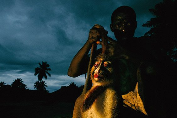 Darkness falls at a small village on the Motaba River as a Bantu hunter appears with his shotgun and food for his family: a spot‐nosed guenon.