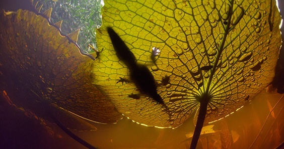 Photo by Octavio Aburto for Sink or Swim exhibit