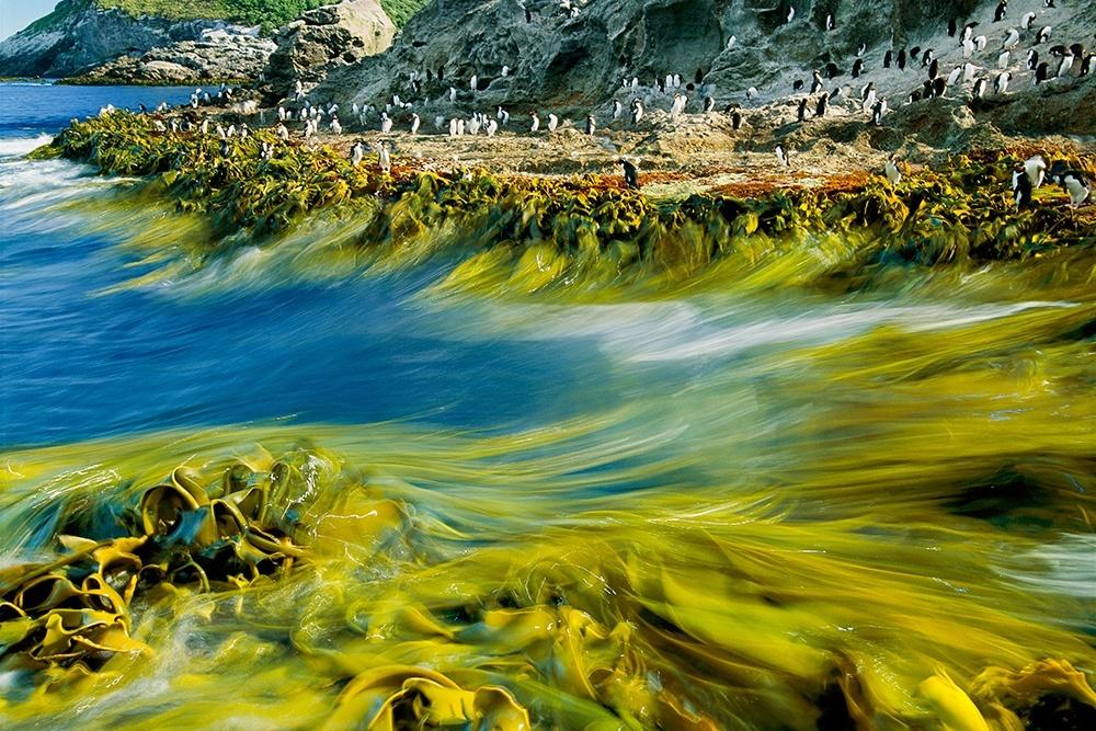 Tidal Surge, New Zealand