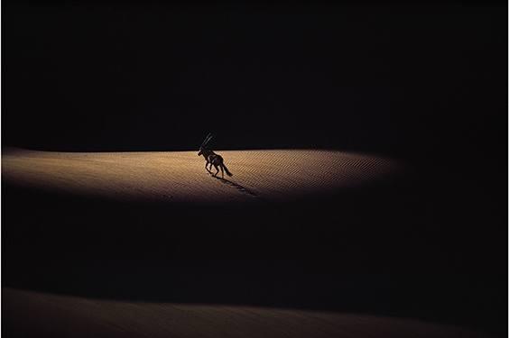 Photo by Jim Brandenburg for LIFE exhibit