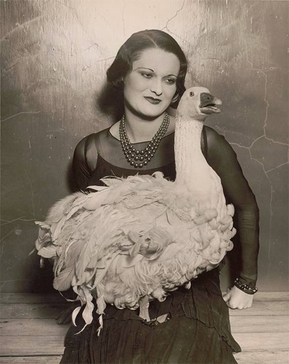 Not an Ostrich: 'Floradora goose' at 41st annual Poultry Show, Madison Square Garden, 1930